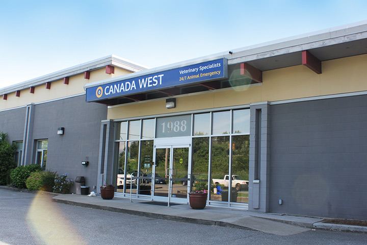 Home - Canada West Veterinary Specialists