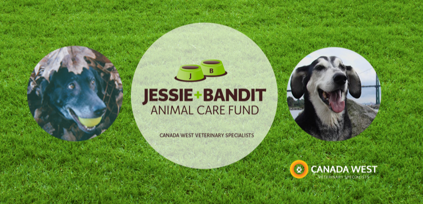 click image to visit the Jessie + Bandit Fund microsite