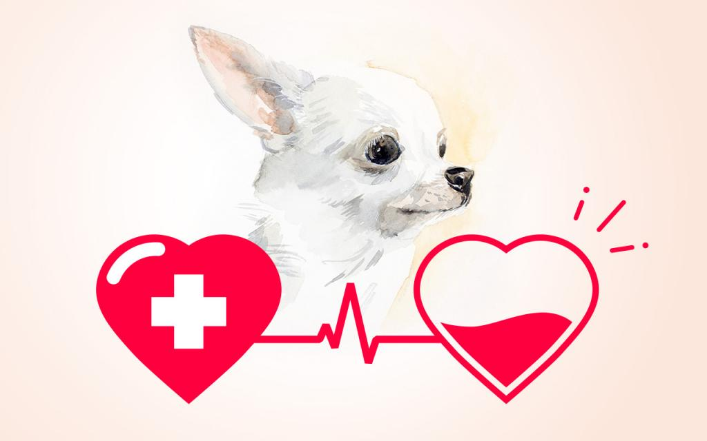 Blood transfusions in cats and dogs