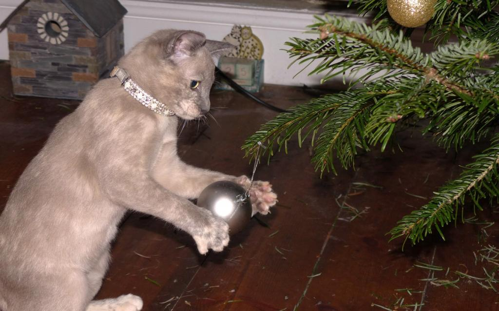 3 Top Holiday Hazards For Your Pets