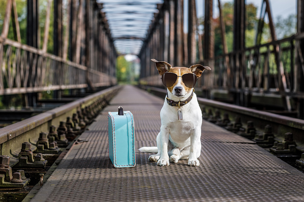 A dog travelling alone.