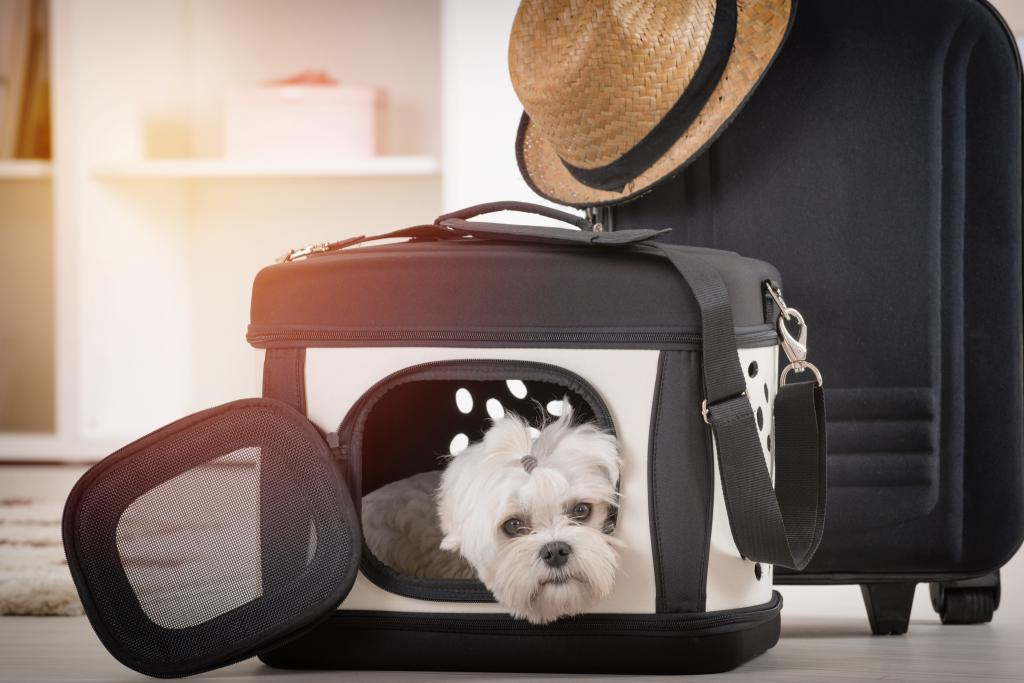 A small dog in a travel basket.